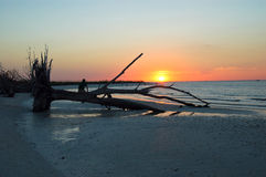 Tropical Sunset and Dead Tree Stock Photography
