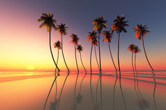 Tropical sunset dramatic Royalty Free Stock Photos