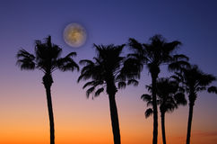 Tropical Sunset with full moon. Tropical Palm Trees with a beautiful sunset with colors of burning orange fading to deep purple and a full moon Stock Photography