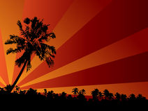 Tropical sunset illustration Royalty Free Stock Photography