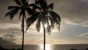Tropical Sunset over the Ocean with Palm Trees stock video