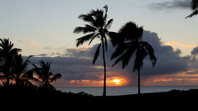 Tropical Sunset over the Ocean with Palm Trees. A tropical Hawaiian Sunset over the ocean with palm trees in Hawaii stock video