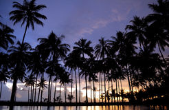 Tropical sunset Royalty Free Stock Images