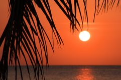 Tropical sunset over sea Royalty Free Stock Photo