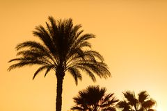 Tropical sunset. Sunset with palm leave over clear sky Royalty Free Stock Image