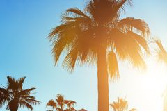 Tropical sunset. Sunset with palm leave over clear sky Stock Images