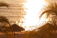 Tropical sunset. Sunset with palm leaves and sea coast shalow depth of field Royalty Free Stock Images