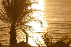 Tropical sunset. Sunset with palm leaves and sea coast shalow depth of field Stock Photography