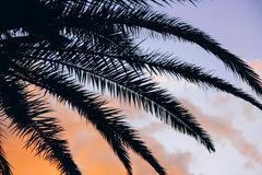 Tropical sunset and palm leaves vivid background stock photos