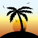 tropical sunset and palm tree. Royalty Free Stock Image