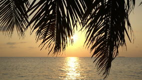 Tropical sunset with palm tree. Tropical sunset with palm branches stock footage