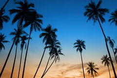 Tropical sunset with palm tree. Silhoette at beach Stock Photography