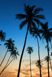 Tropical sunset with palm tree. Silhoette at beach Stock Image