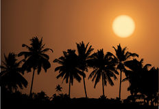 Tropical sunset, palm tree silhouette Royalty Free Stock Photos