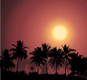 Tropical sunset, palm tree silhouette. Vector illustration Royalty Free Stock Photo