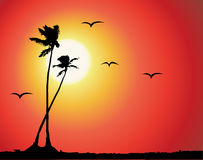 Tropical sunset, palm tree silhouette. Vector illustration Stock Images