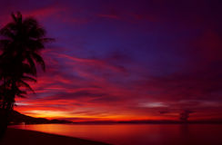 Tropical sunset with palm tree. Silhouette Stock Photos