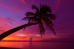Tropical sunset with palm tree. Silhouette at beach Royalty Free Stock Photography
