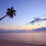 Tropical sunset with palm tree silhouette Stock Images