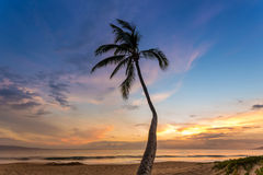 Tropical Sunset Palm Royalty Free Stock Photography