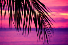 Tropical sunset with palm tree Stock Images