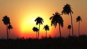 Tropical sunset, palm tree in the sun Stock Photos