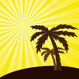 tropical sunset and palm trees. Royalty Free Stock Photo