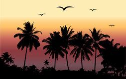 Tropical sunset, palm trees Royalty Free Stock Photo