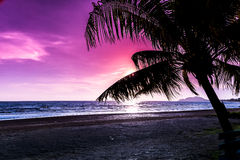 Tropical sunset with palm trees silhouette. At beach Stock Image