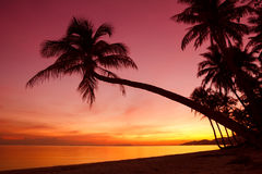 Tropical sunset with palm trees Royalty Free Stock Photo