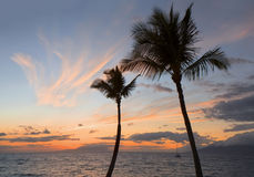 Tropical sunset with palm trees silhouette Royalty Free Stock Images