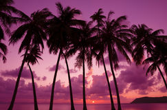Tropical sunset with palm trees. Silhouette, Thailand Royalty Free Stock Image