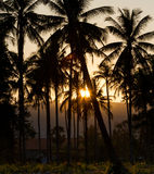 Tropical sunset. Sunset and palm trees silhouettes Stock Photo
