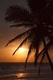 Tropical sunset with palms Stock Photography