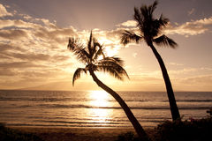 Tropical Sunset Palms. Palm trees  silhouetted in a dramatic tropical sunset Royalty Free Stock Photo