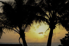 Tropical Sunset between palms at beach Stock Photography