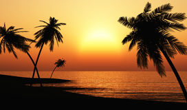 Tropical Sunset with Palms Silhouette Royalty Free Stock Photography