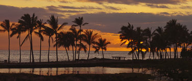 Tropical sunset, panoramic view Royalty Free Stock Images