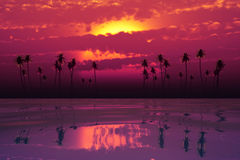 Tropical sunset with pink clouds Royalty Free Stock Images