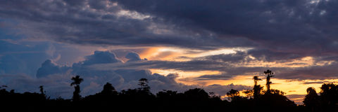 Tropical sunset and rainforest silhouette Royalty Free Stock Image