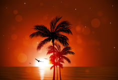 Tropical Sunset Red Background Royalty Free Stock Photography