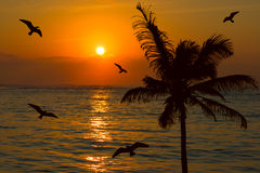 Tropical sunset scene Stock Photo