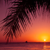 Tropical sunset. Sea, palm and sun. Royalty Free Stock Images