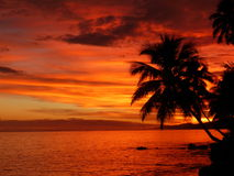 Tropical Sunset. A stunning tropical sunset with palm tree. Taken on the Coral Coast, Fiji. Tropical Dream Royalty Free Stock Photography