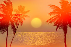 Tropical sunset or sunrise Royalty Free Stock Photo