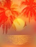 Tropical sunset or sunrise Stock Photos