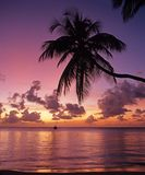 Tropical sunset, Tobago. Stock Images