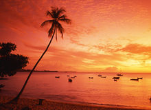 Tropical sunset, Tobago. View out to sea with palm tree in the foreground at sunset, Pigeon Point, Tobago, Trinidad & Tobago, Caribbean, West Indies Royalty Free Stock Photography