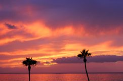 Tropical sunset and two palm trees royalty free stock photography