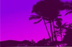 Tropical Sunset Vector Stock Photos
